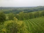 vinogradi