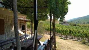 Carski vinogradi 2