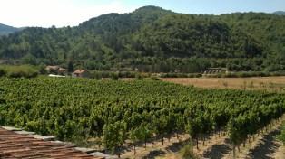 Carski vinogradi 3