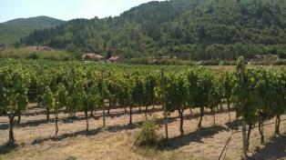 Carski vinogradi 4